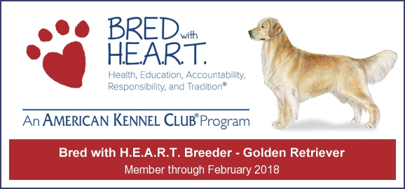 GOLDEN-B-BEAR Kennels, Golden Retrievers - Sudbury